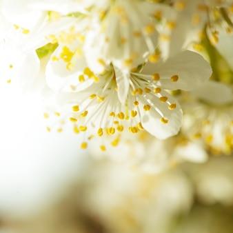 Beau bokeh de printemps pour la conception avec fond