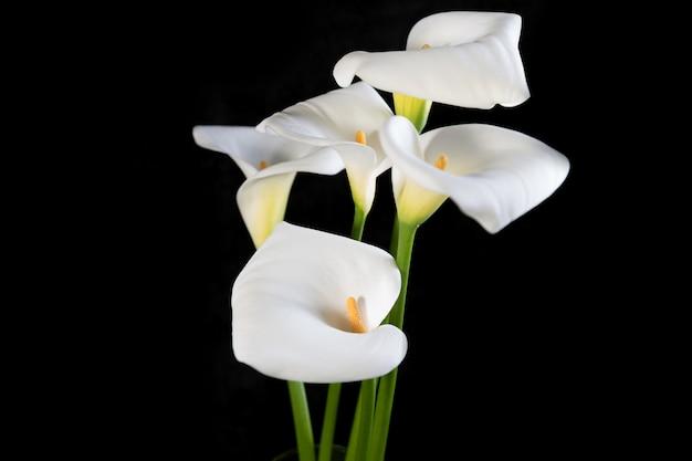 Beau bouquet de callas blancs sur une orientation horizontale noire