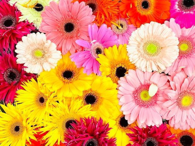 Beau bouquet de gerberas multicolores, vue de dessus. fond, texture