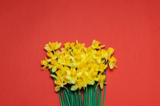 Beau bouquet de jonquilles jaunes sur fond rouge