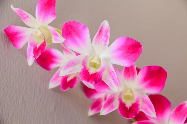 Beau bouquet d'orchidées pourpres