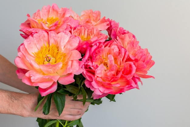 Beau bouquet de pivoines roses dans la main d'un homme sur un mur blanc