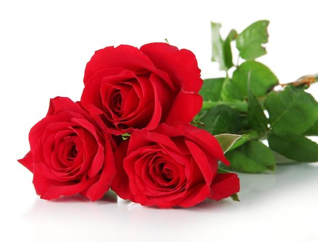 Beau bouquet de roses sur blanc