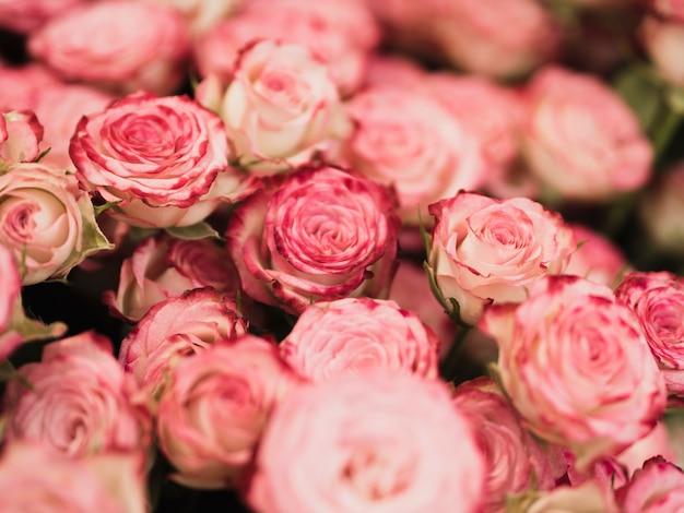 Beau bouquet de roses se bouchent