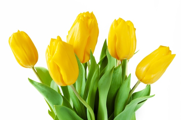 Beau bouquet de tulipes sur fond blanc