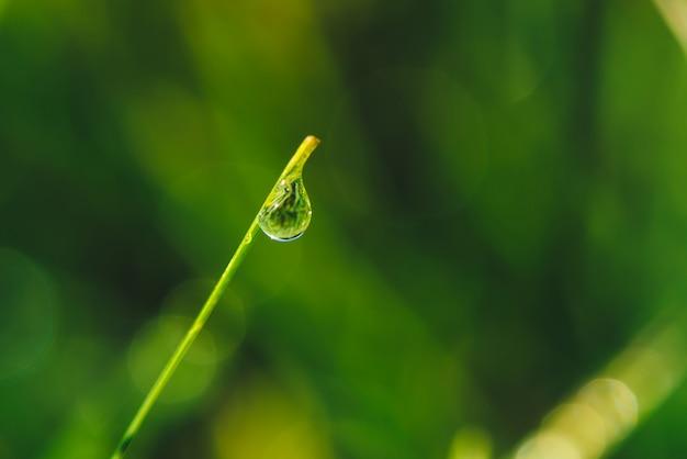 Beau brin d'herbe vert brillant vif avec des gouttes de rosée close-up avec copie espace. verdure pure, agréable et agréable avec des gouttes de pluie au soleil en macro. plantes texturées vertes par temps de pluie.