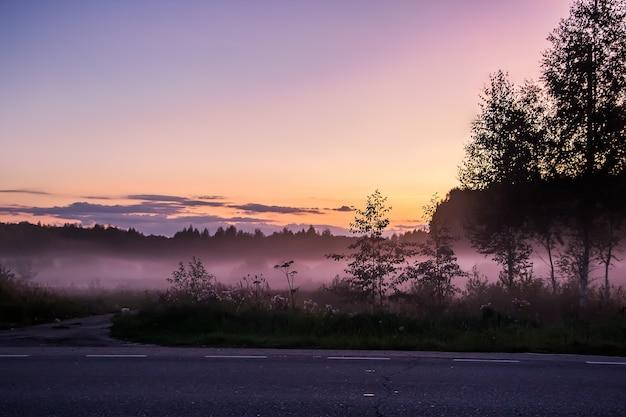 Beau brouillard violet et rose dans la forêt au crépuscule du coucher du soleil dans la nature