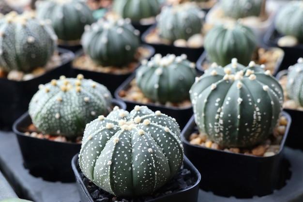 Beau cactus à vendre