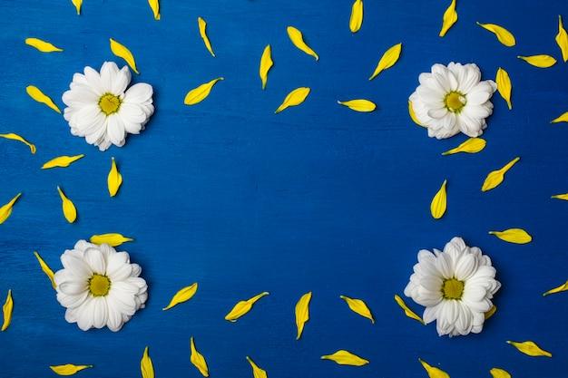 Beau cadre de chrysanthèmes blancs et pétales jaunes sur fond bleu.