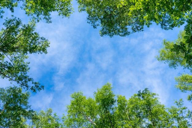 Beau cadre naturel de feuillage contre le ciel.