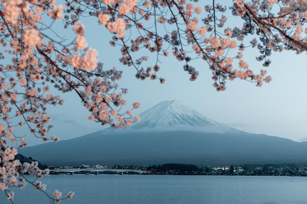Beau cerisier avec des fleurs