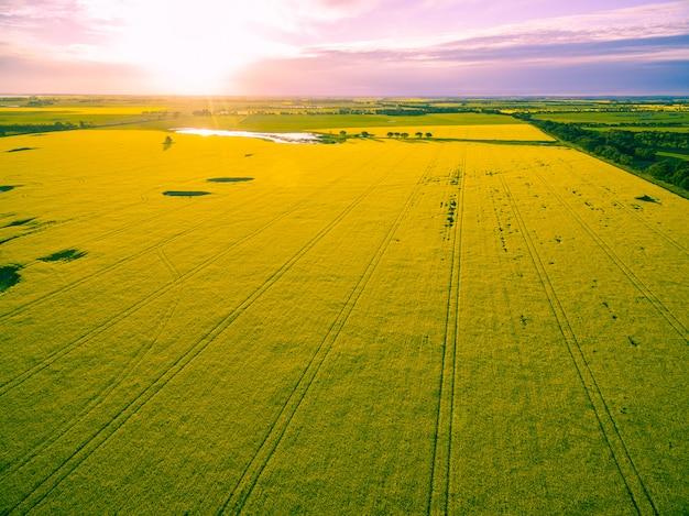 Beau champ de canola au coucher du soleil rougeoyant en australie