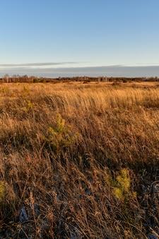 Beau champ en russie en automne