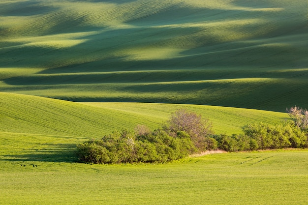 Beau champ vert en moravie du sud, république tchèque