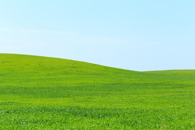 Beau champ vert