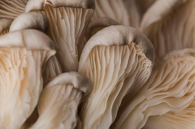 Beau champignon frais macro