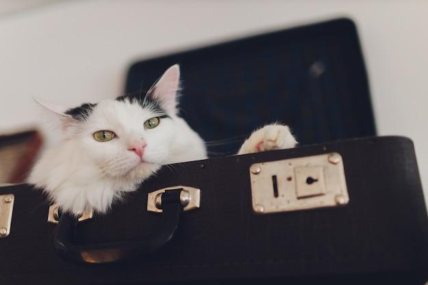 Beau chat allongé sur le sac de voyage.