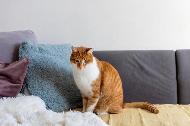 Beau chat assis sur un canapé
