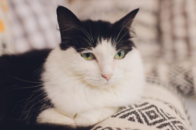 Beau chat assis à la maison à la recherche de suite.