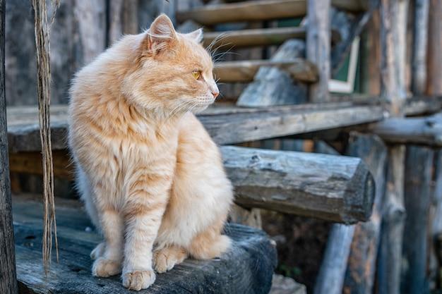 Beau chat au gingembre regardant de côté