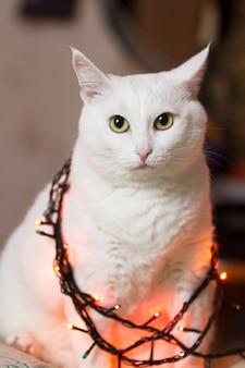 Beau chat blanc est assis enveloppé dans une guirlande. guirlandes lumineuses sur le cou du chat