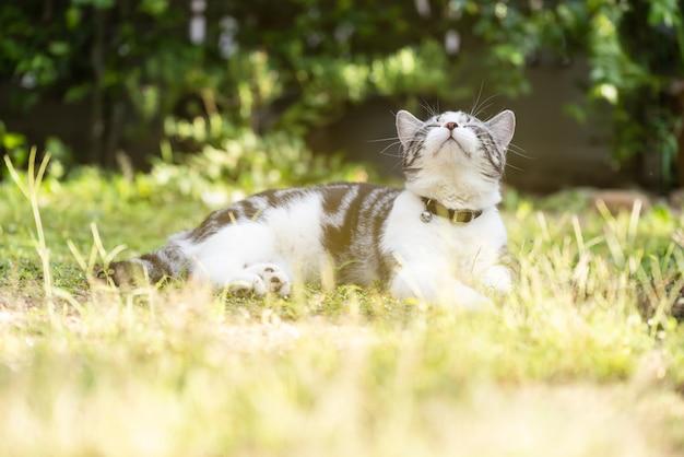 Beau chat en bonne santé