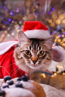 Beau chat dans un chapeau de père noël.