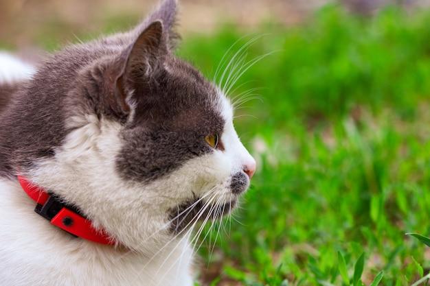 Le beau chat dans la rue dans l'herbe est assis