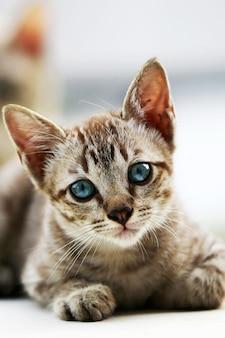 Beau chat gris assis à l'extérieur, portrait de visage de chat