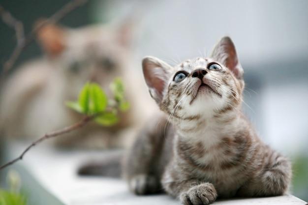 Beau chat gris assis à l'extérieur
