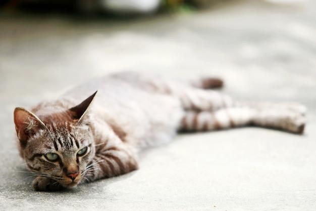 Beau chat gris dormant à l'extérieur