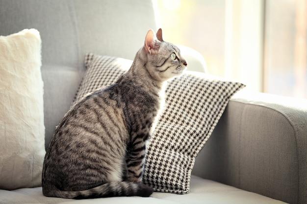 Beau chat sur gros plan de canapé