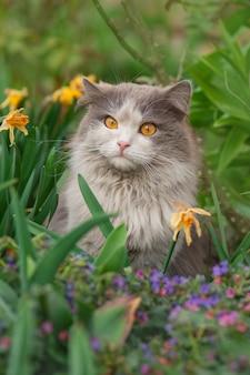 Beau chat incroyable profitant de la liberté en plein air