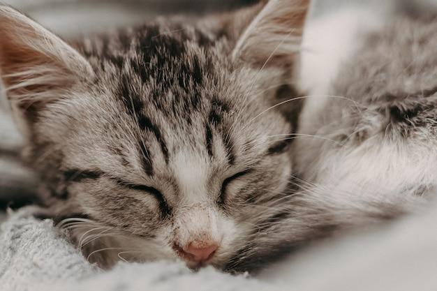 Beau chat mignon agrandi, se reposant d'une manière chaleureuse confortable confortable.