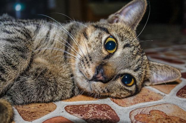Beau chat mignon