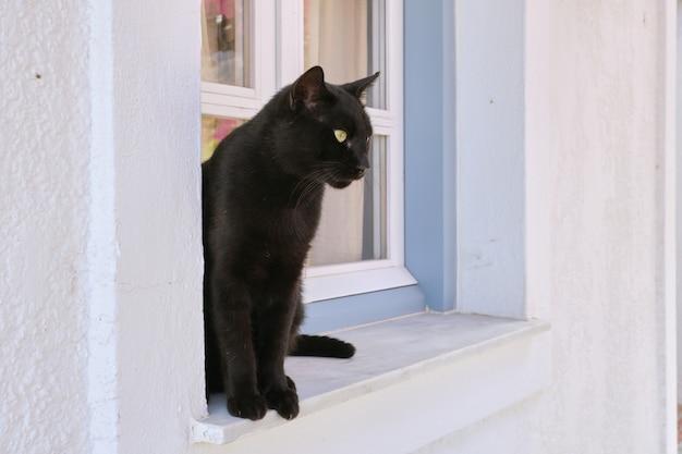Beau chat noir adulte mâle assis sur le rebord de la fenêtre à la recherche sur le côté