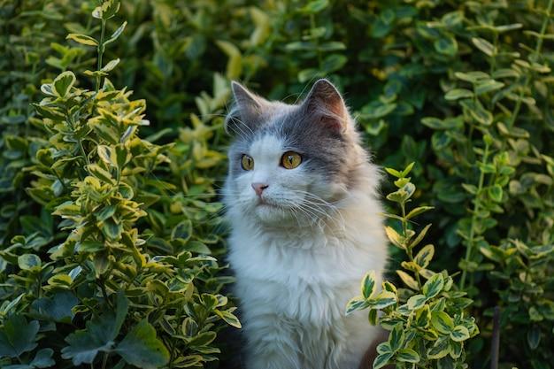 Beau chat et plantes fleuries dans le jardin