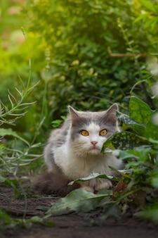 Beau chat et plantes en fleurs dans le jardin