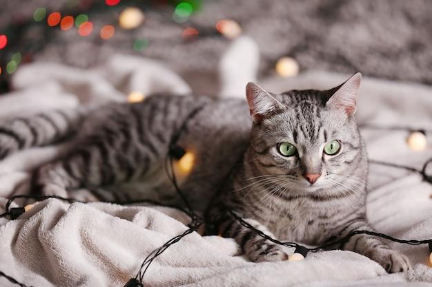Beau chat près de l'arbre de noël avec décoration