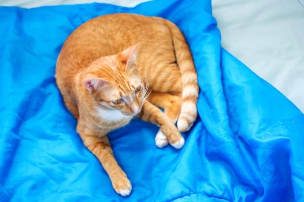 Beau chat rouge couché dans une pièce, mise au point douce.