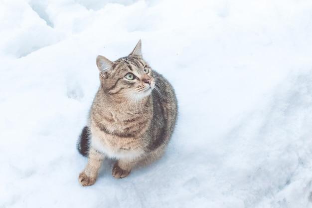 Beau chat de rue gris sur fond de neige, gros plan