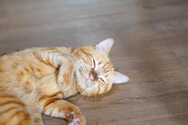 Beau chat sous beaucoup sentir