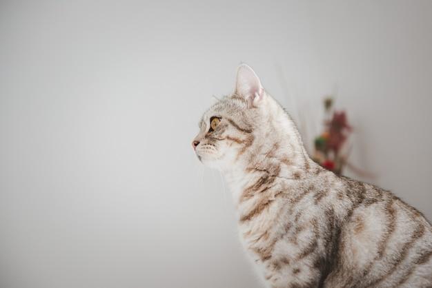 Beau chat tigré s'asseoir et à l'extérieur de la pièce