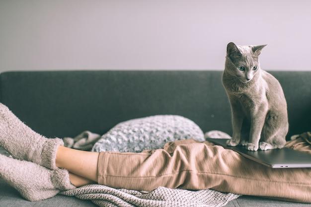 Beau chaton allongé sur le lit
