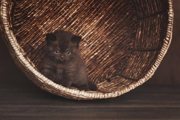Beau chaton brun se cache dans un grand panier