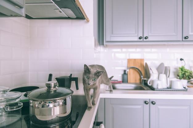 Beau chaton jouant sur la cuisine