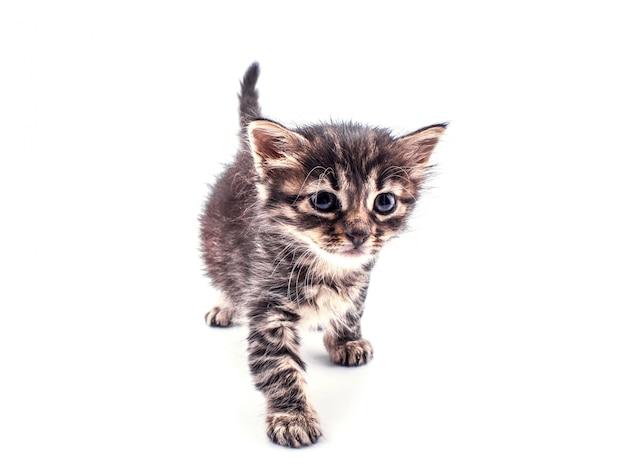 Beau chaton tigré moelleux avec de grands yeux isolés