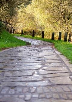 Beau chemin forestier. fond d'automne, toile de fond