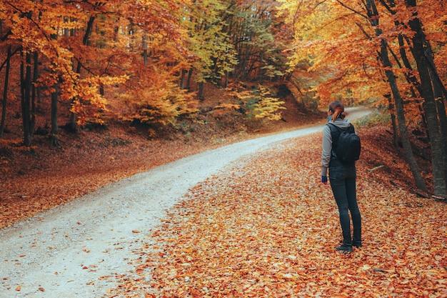 Beau chemin de montagne de forêt d'automne