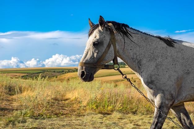 Beau cheval blanc contre le ciel bleu avec des nuages blancs